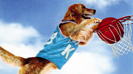airbud jersey