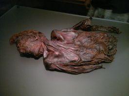 800px-Bog-body_Clonycavan-Man